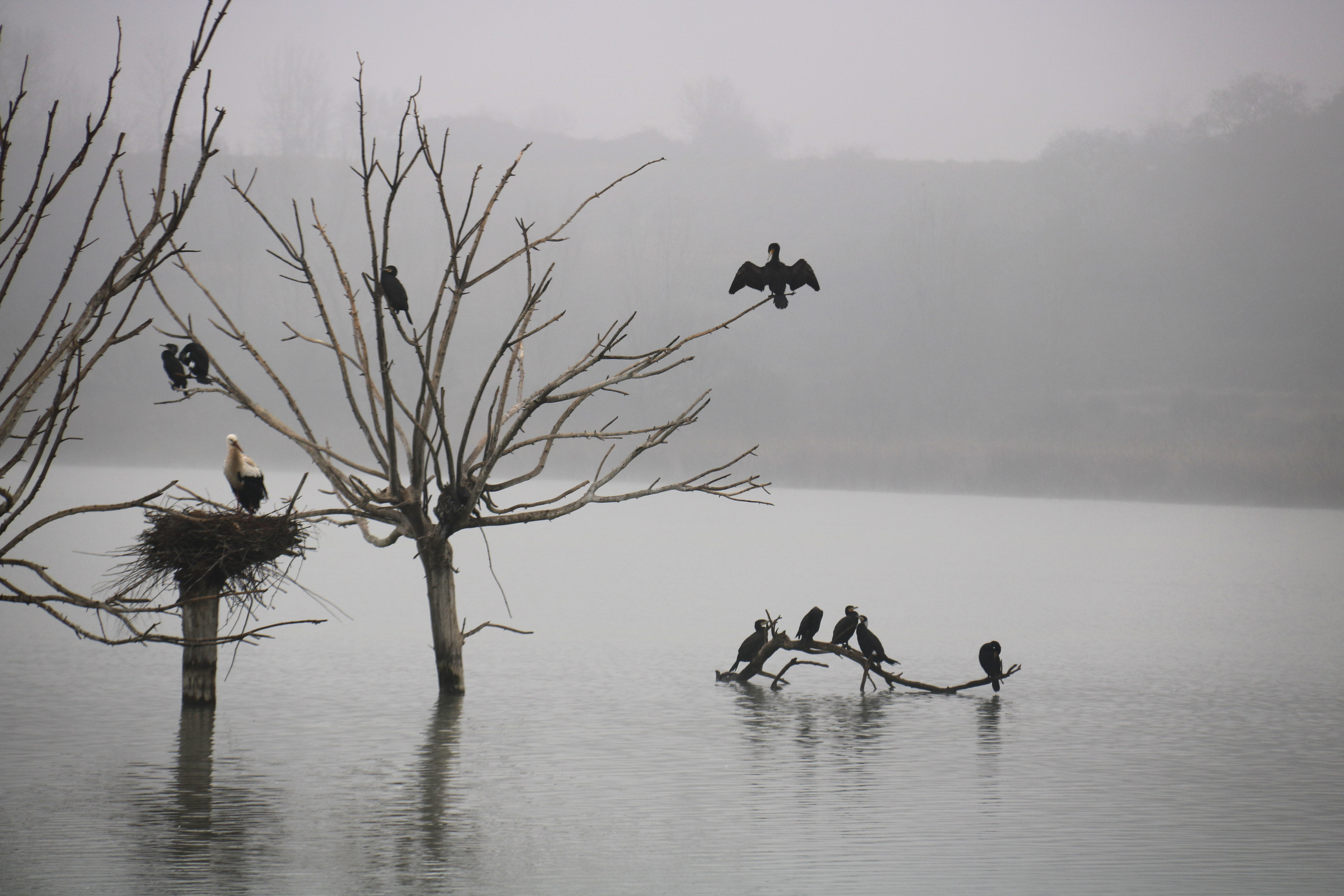 """L'estany d'Ivars i Vila-sana mostra símptomes """"d'esgotament i pèrdua de valor ecològic"""""""
