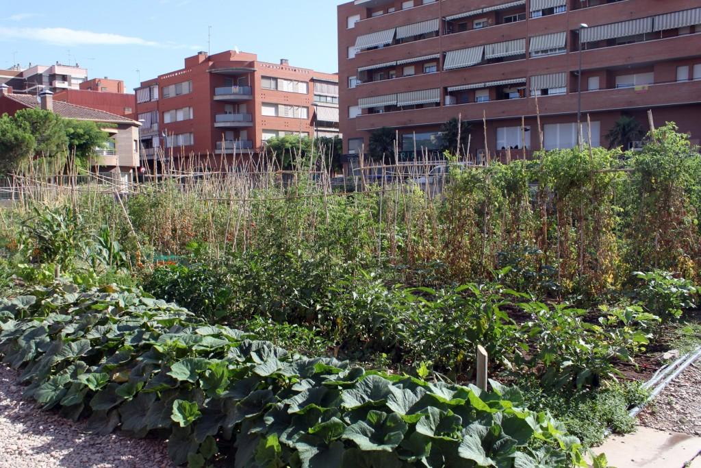 IMATGE D'ARXIU · Els horts socials impulsats per l'Ajuntament de Tàrrega
