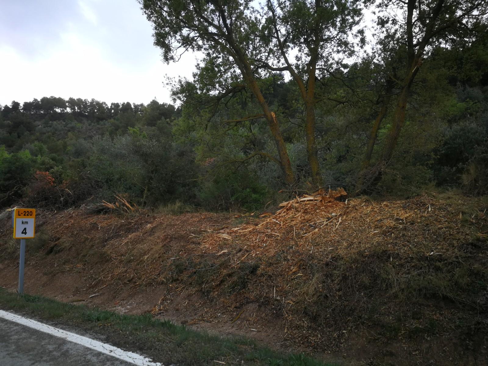 El grup ecològista Gema denuncia la tala d'arbat a les carreteres C-14 i L- 220 a la comarca de l'Urgell.