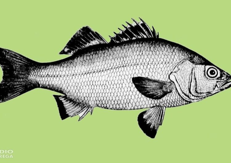 Eduard Ribera publica el seu darrer llibre 'El peix que volia ser home'