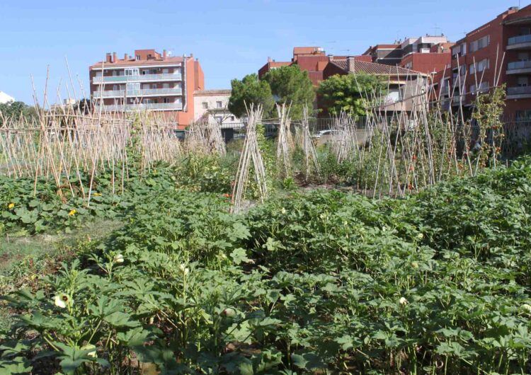 L'Ajuntament de Tàrrega ajorna fins l'any vinent el programa d'horts urbans a causa de la pandèmia