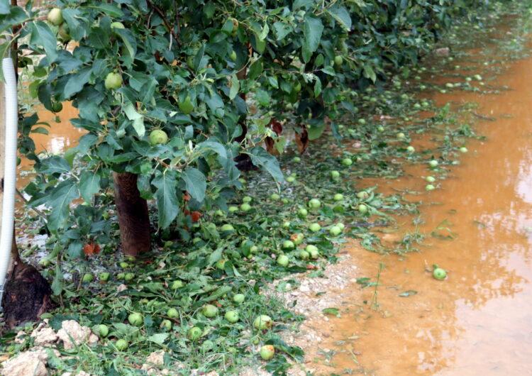 La pedregada deixa danys de fins el 100% en poma i pera a l'Urgell i també malmet camps de panís i cereal