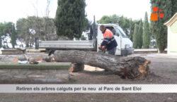 Retiren els arbres caiguts per la neu al Parc de…
