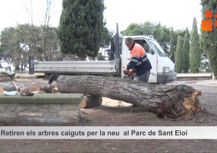 Retiren els arbres caiguts per la neu  al Parc de Sant Eloi