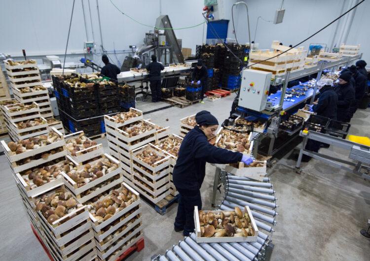 L'empresa de Tàrrega Laumont tanca l'any fiscal de la pandèmia amb una facturació de 21 milions d'euros